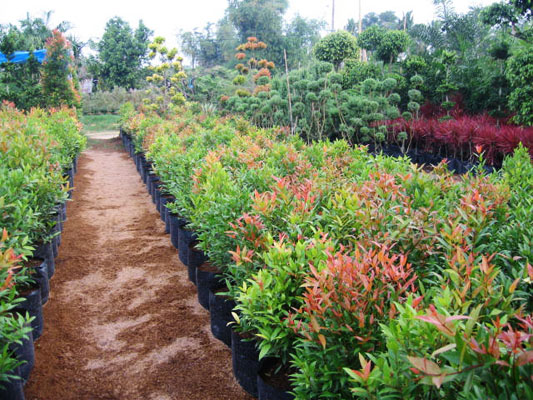 The flower plant by wtu philippines plant rentals for Philippine garden plants