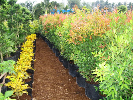 The Flower Plant By Wtu Philippines Plant Rentals